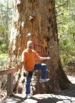 Steve at Gloucester Tree